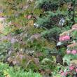 10月20日(金) 雨の合間に;キアゲハの幼虫など