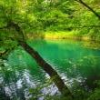 五色沼自然探勝路散策