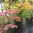 秋の玉川上水をサイクリング
