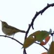 鳥見 28