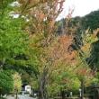 秋めいて・・・