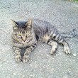 10月13日(土)のつぶやき 今朝も違う猫が寄って来た!なぜ逃げない?(笑) 関西で #三田牛 の上ロース