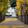 園芸高校のイチョウ並木