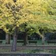 17-1027b 昭和記念公園