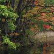 秋の気まま旅 42日目 (昭和村・矢ノ原湿原の紅葉)