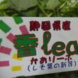 香leaf かおりーふって知ってますか?