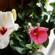 我が家の庭で咲いている花
