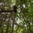 上野の森 樹木調査3回目