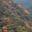 照葉樹林の秋