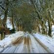 アイルランド: Snowy snaps