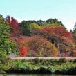 ぶらり散策~公園の秋花と紅葉 その7