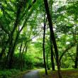 ブローニュの森