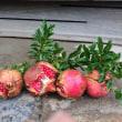 神秘な果実
