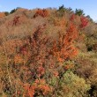 和泉葛城山(関百)☆紅葉と滝とお地蔵さんと(11月13日)