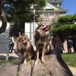 大阪城と記念写真 by おとん