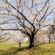 「花は桜木、人は武士」