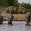 ナミビア/エトーシャ国立公園・水場の風景