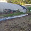 ニンニク用の畝 完成しました。