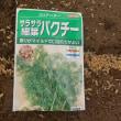 秋野菜の種まき開始!