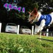 勝利へのジャンプ!