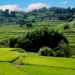 笠の蕎麦畑& 稲淵地区散策