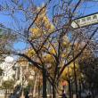 京都の街角風景  〜  御射山公園の秋