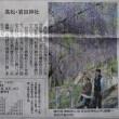 1465話 「 藤の花 」 4/20・金曜(晴)
