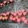 冬庭に・・・薔薇・一輪。・・花は、強し。・・・