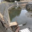 中津良の白魚漁