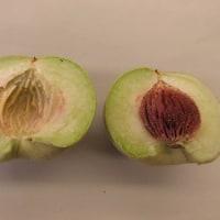 Prunus ferganensis