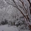 くじゅう、冬真っ只中p3(D810、18-35mm)