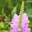 グズグズ天気で蝉、蝶その他の昆虫は?