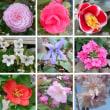 庭で咲いた花<続き>