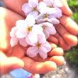 春の日のできごと。