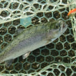 シーズン初釣行! 『北方マス釣り場』