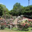 光綾公園のバラ その2