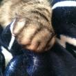 【hana】猫なりにヒトを看病してくれたのかな