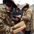 東チベットの旅 冬虫夏草