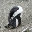 ヒゲペンギンの日常
