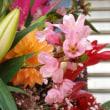 お誕生日のスタンド 春 桜