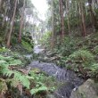 梅雨入りの鳴滝