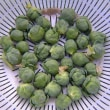 芽キャベツ栽培秋植、初収穫した