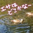 カモ〜ヾ(^ ▽^)ノ