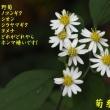 2018/10/16 根古峰へ再び亀甲ハグマ未だ咲かず