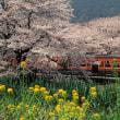 身延線115系 春爛漫の小駅にて 1995-04-08