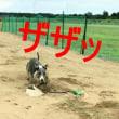 ビビオトゲン 秋田へ強化合宿に行く その3