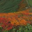紅葉の月山へ