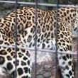旭山動物園へ