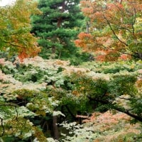 殿ヶ谷戸庭園秋の様子