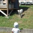 山羊と幼児